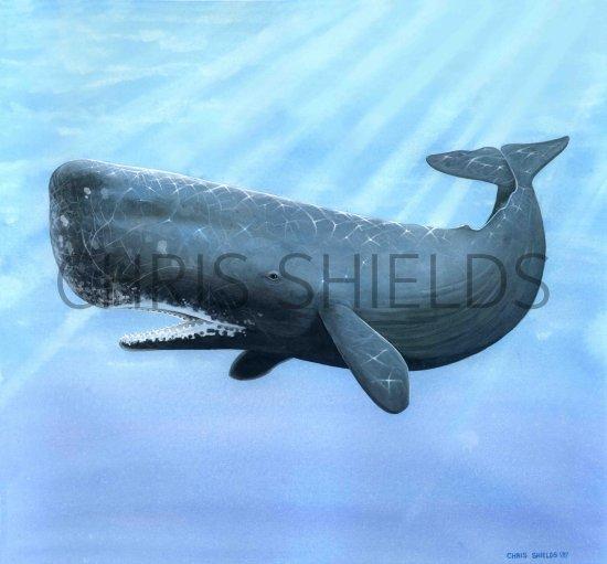 Prehistoric Sperm Whales