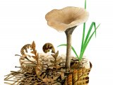 Clitocybe vibecina (Mealy Funnel) FU015